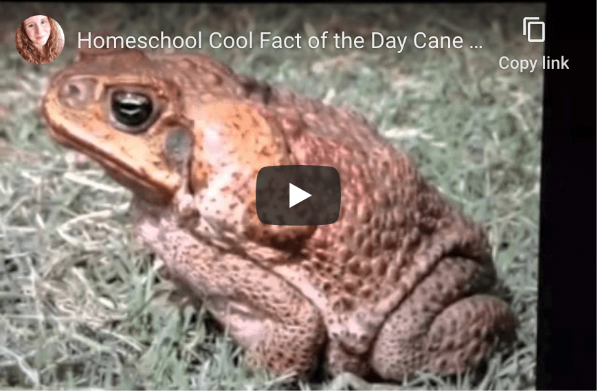 All about cane toads