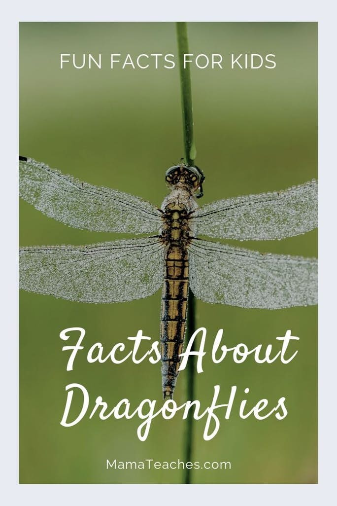Fun Facts for Kids About Dragonflies