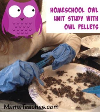 An Owl Pellet Unit Study