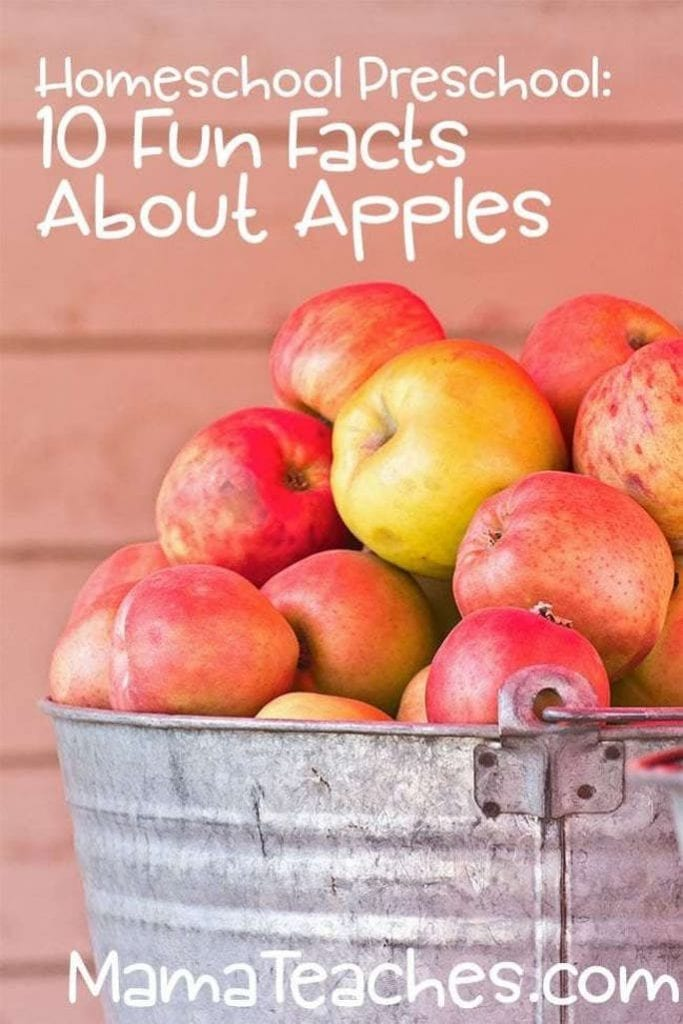 All About Apples - Fun Facts for Kids About Apples