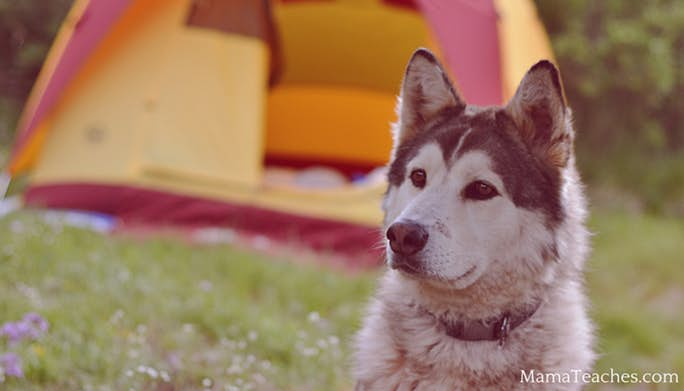 Camping with Dogs: Tips For Keeping Your Dog Safe