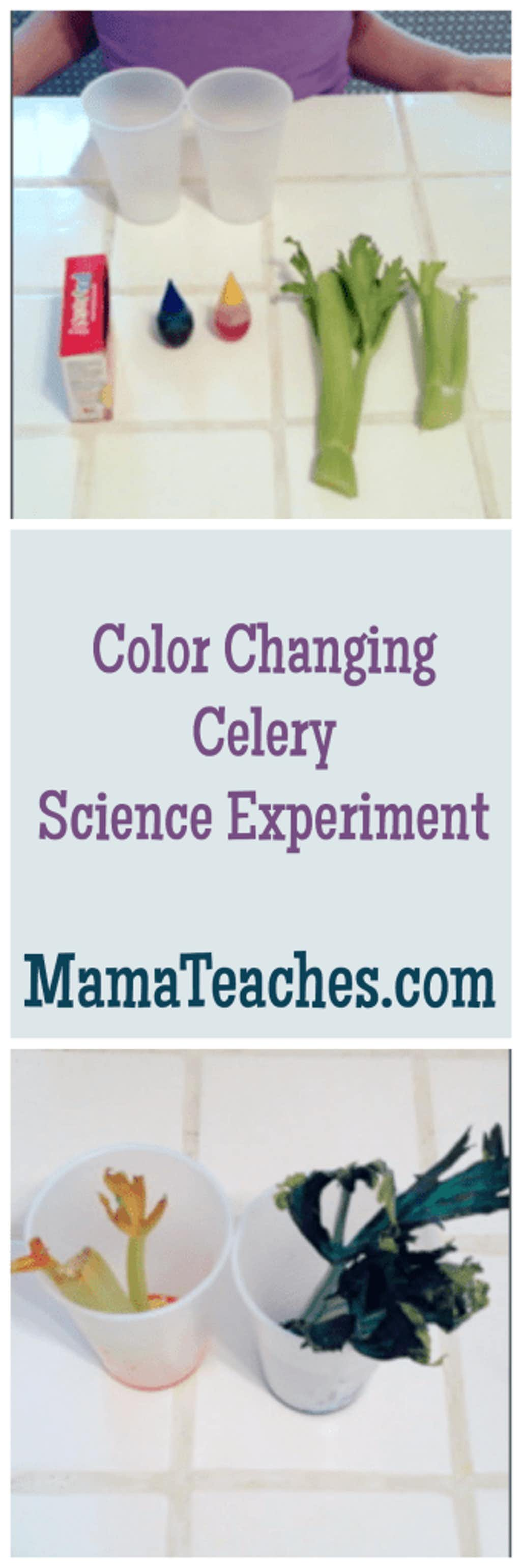 Color Changing Celery Experiment