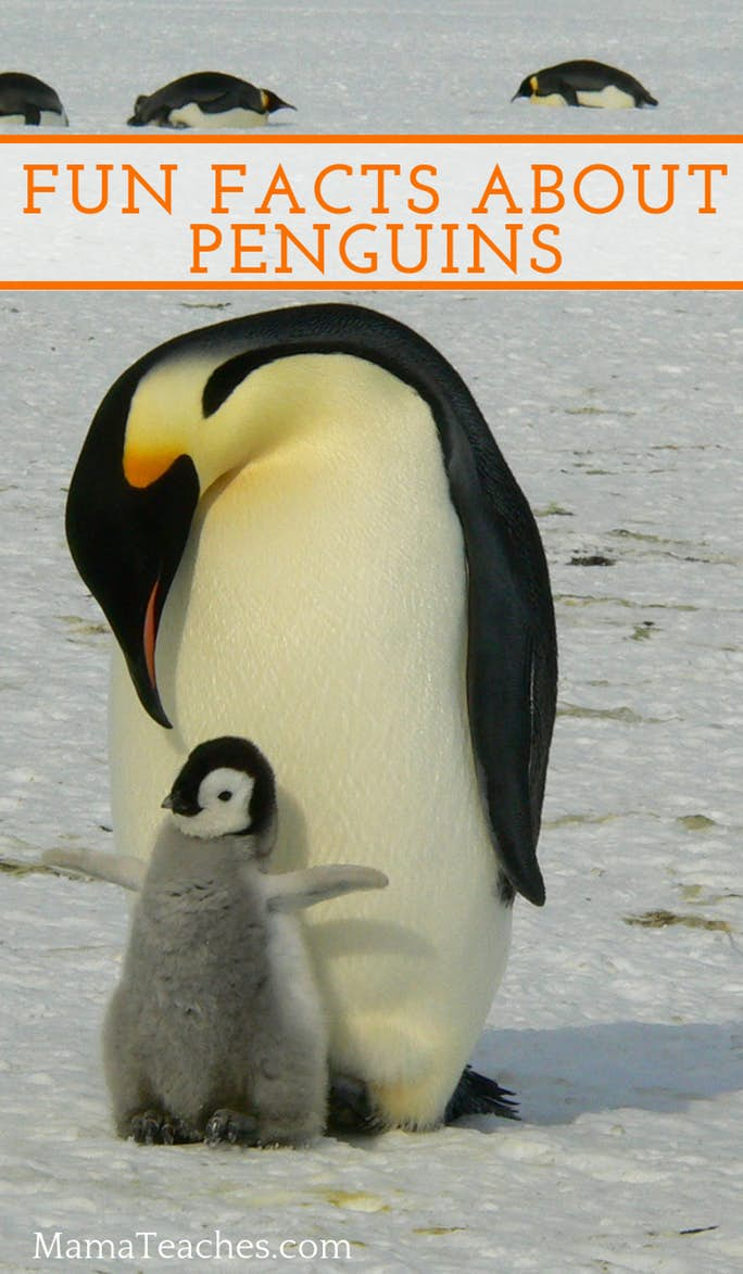 Fun Facts About Penguins for Kids