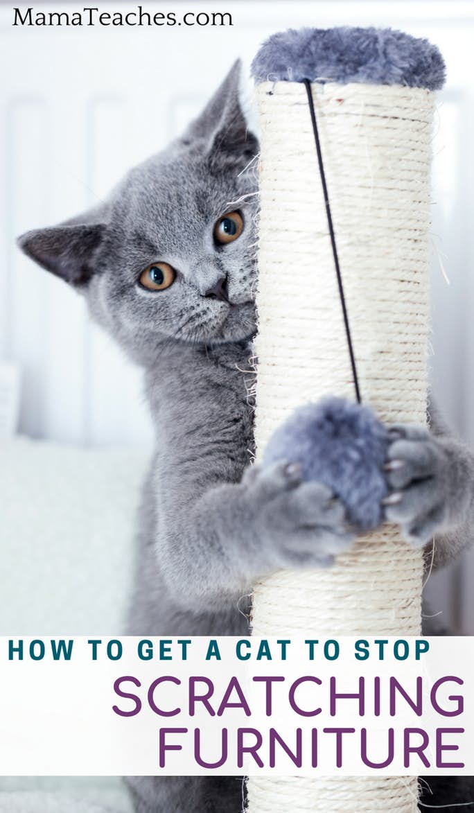 How to Get Cats to Stop Scratching Furniture
