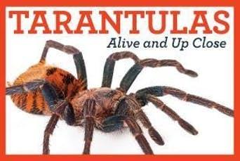 Tarantula Unit Study