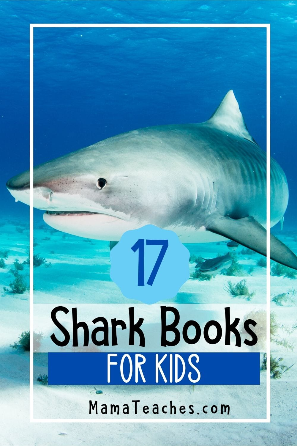 17 Shark Books for Kids - Books About Sharks for Children in Preschool through Middle School - Great for Summer Reading -  MamaTeaches.com