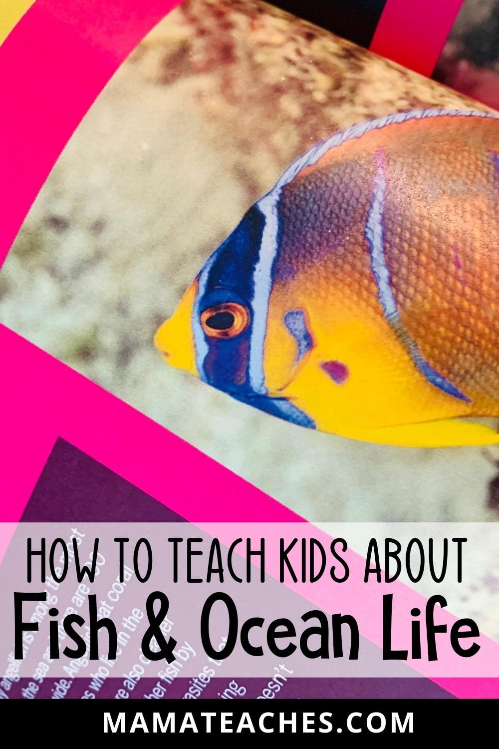How to Teach Kids About Fish and Ocean Life - MamaTeaches.com