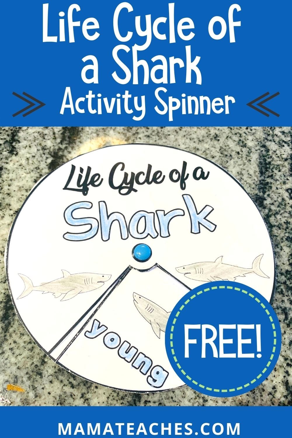 Free Life Cycle of a Shark Activity Spinner