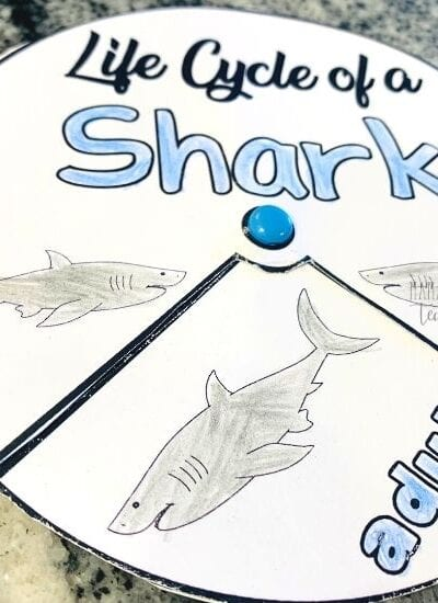 Life Cycle of a Shark Spinner Activity
