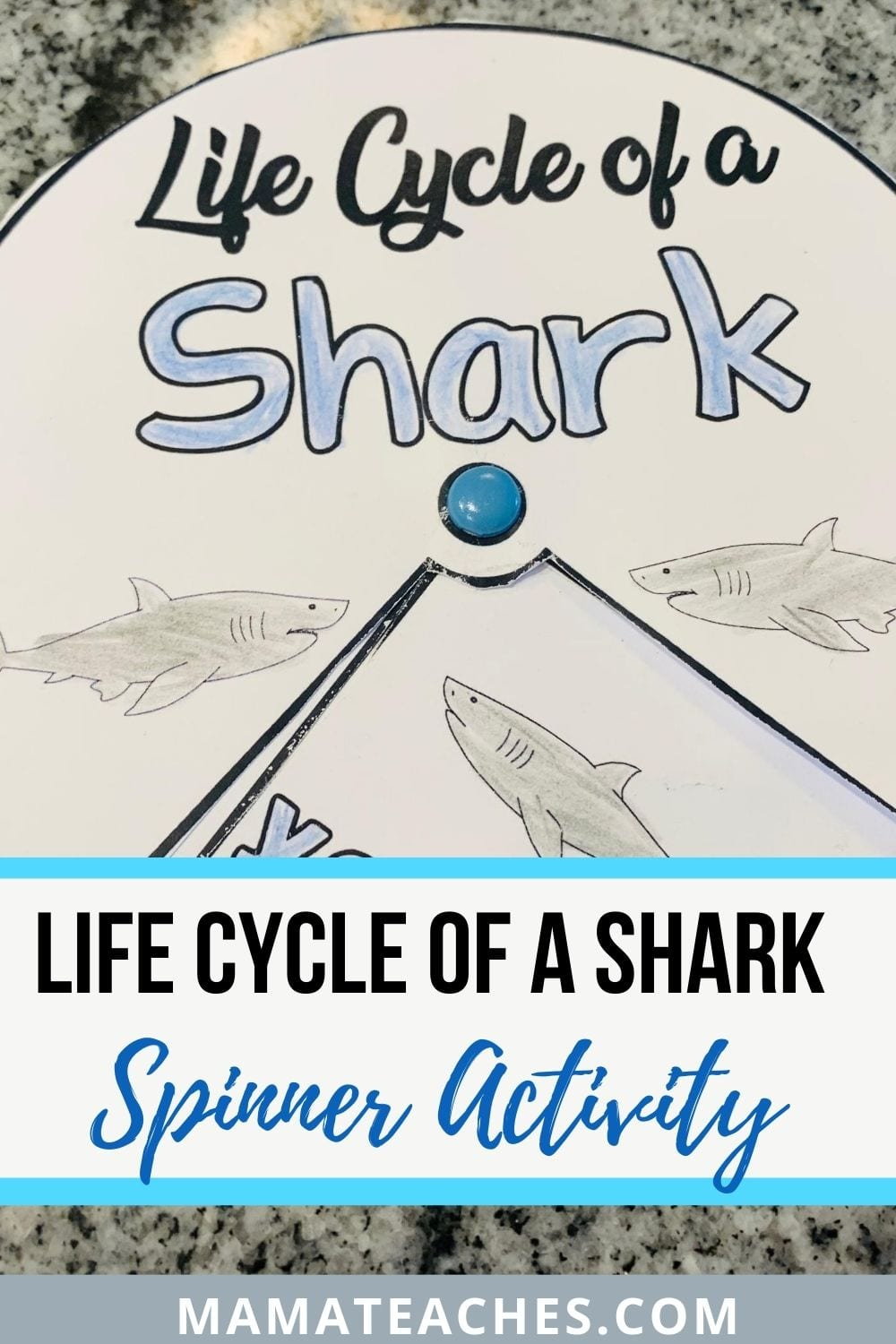 Life Cycle of a Shark Spinner Activity - MamaTeaches