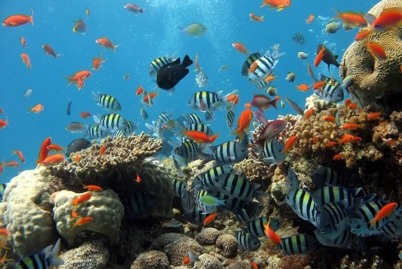 10 Fun Facts About Fish That Every Kid Needs to Know