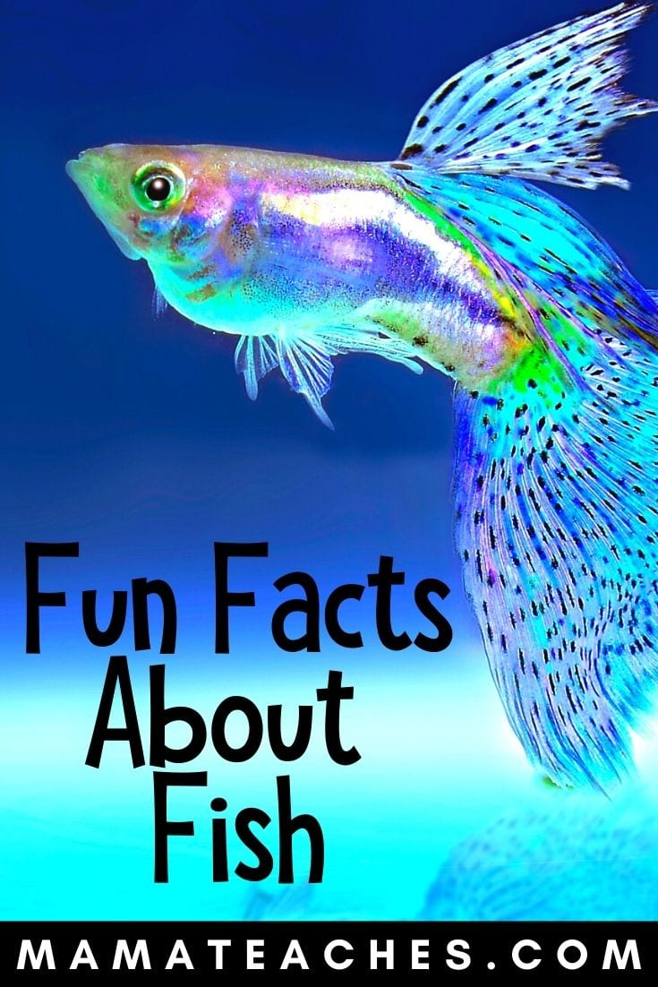 10 Fun Fish Facts for Kids