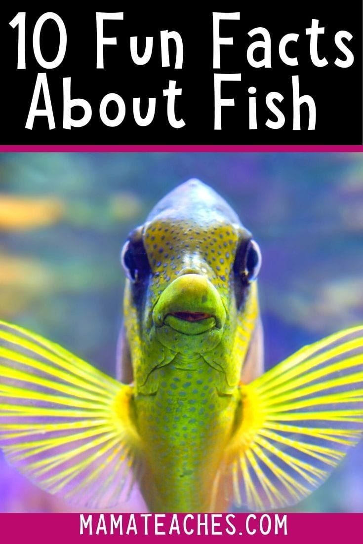 10 Super Fun Facts About Fish for Kids