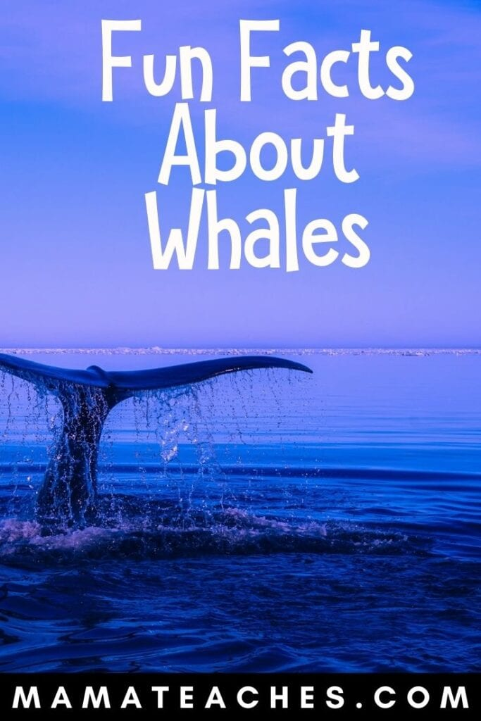 8 Fun Facts About Whales for Kids