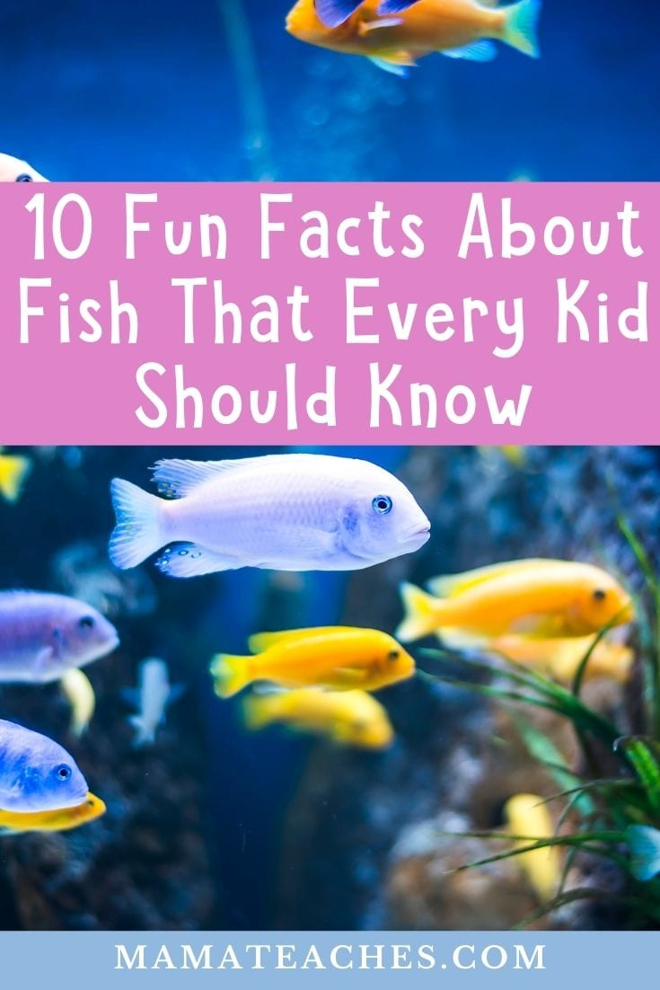 Facts About Fish - Fun Facts That Every Kid Should Know