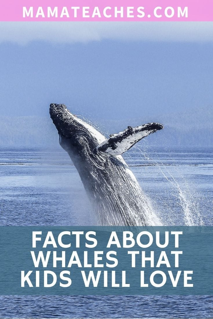 Fun Facts About Whales for Kids