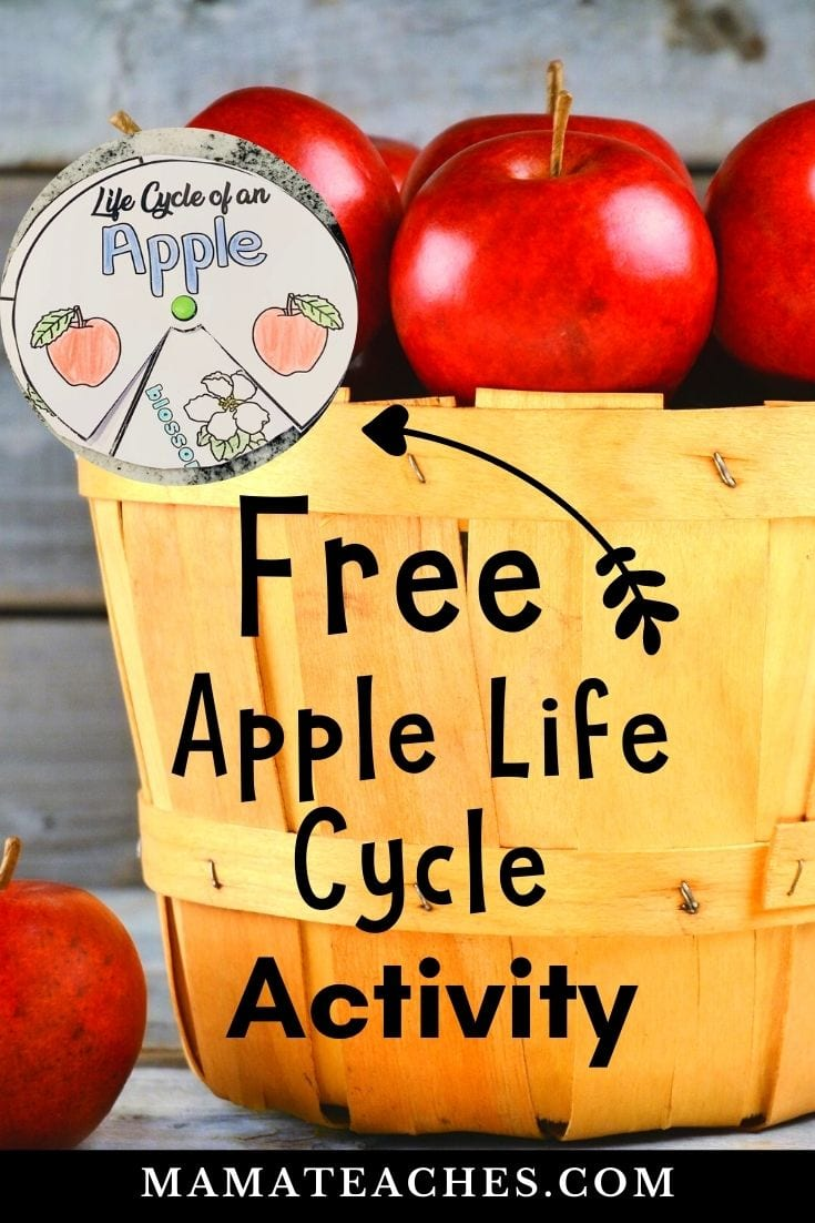Free Apple Life Cycle Activity Printable - MamaTeaches