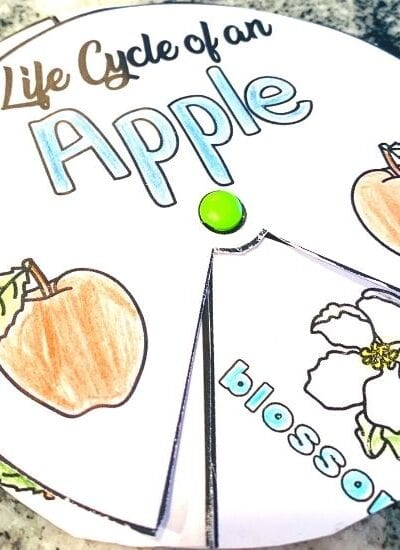 Apple Life Cycle Spinner Activity