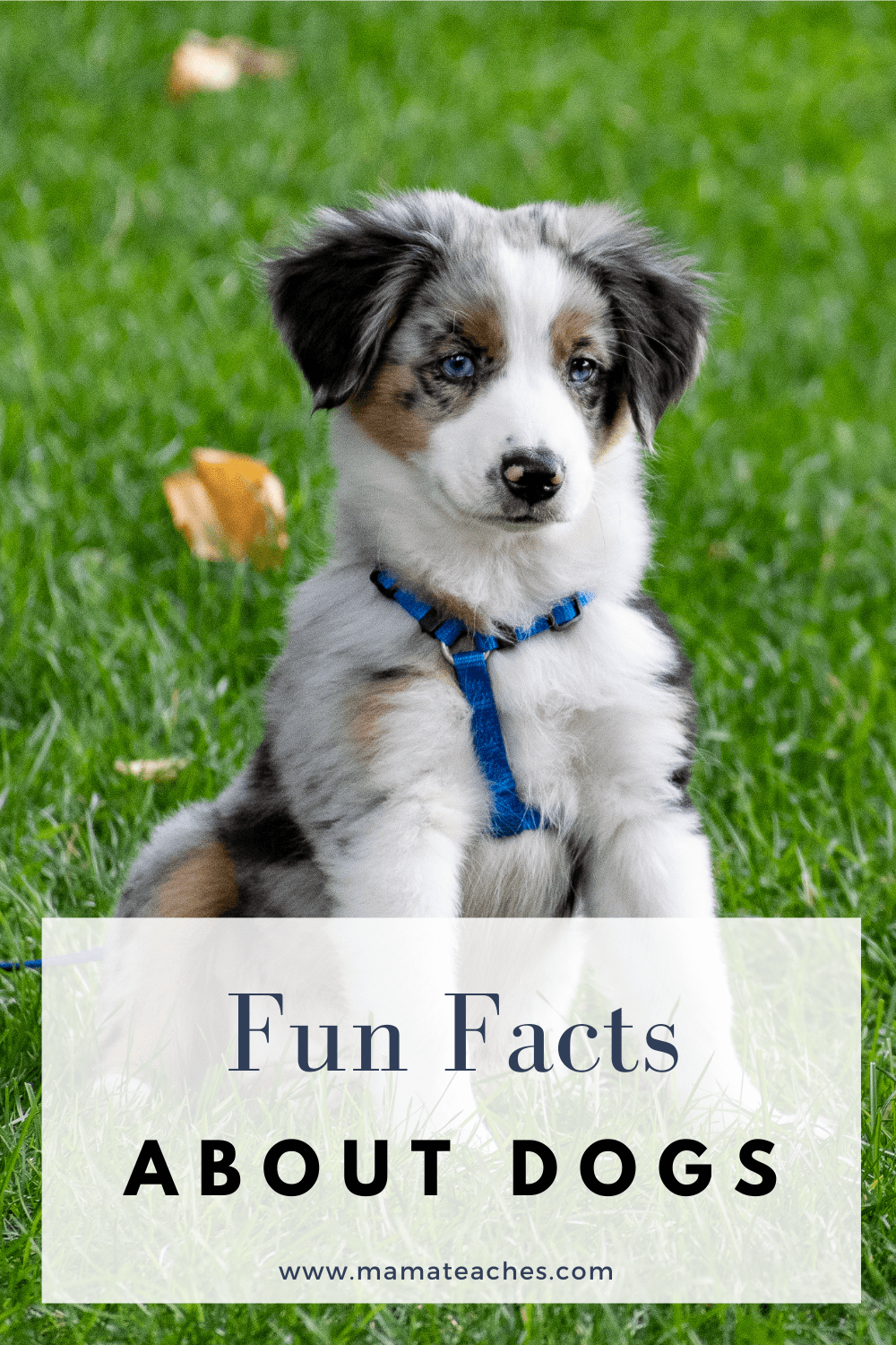 Fun Facts About Dogs