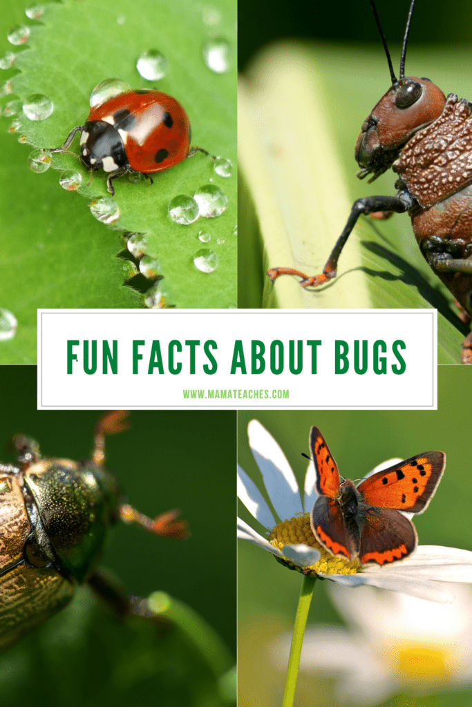 Fun Facts About Bugs