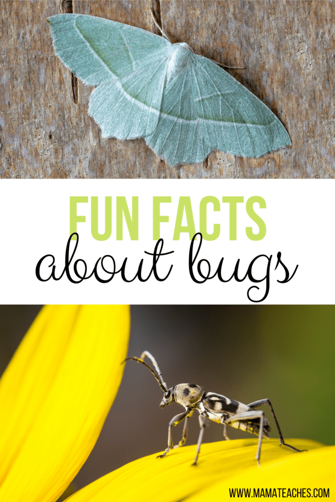 Fun Facts About Insects