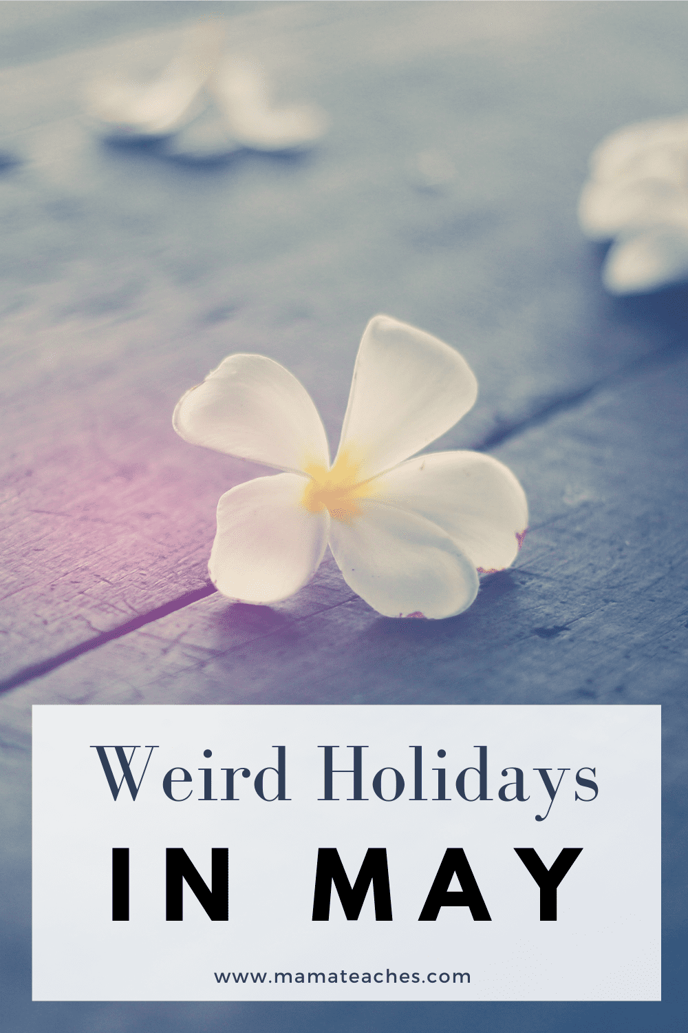 Weird Holidays in May