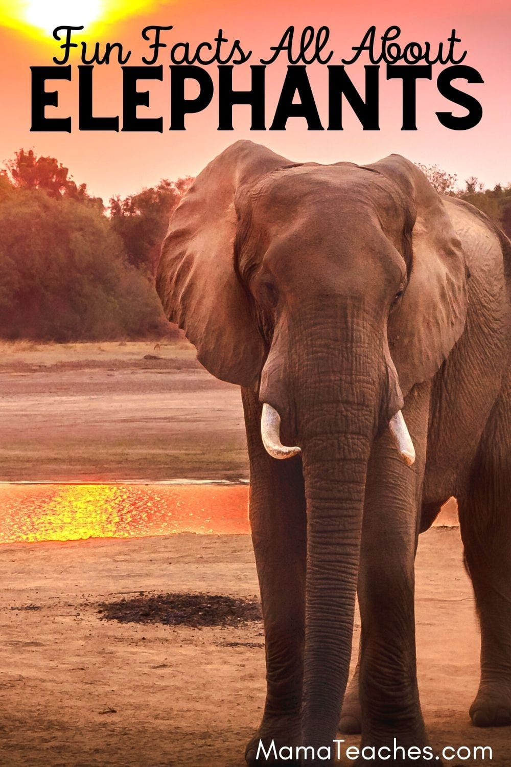 Fun Facts All About Elephants for Kids
