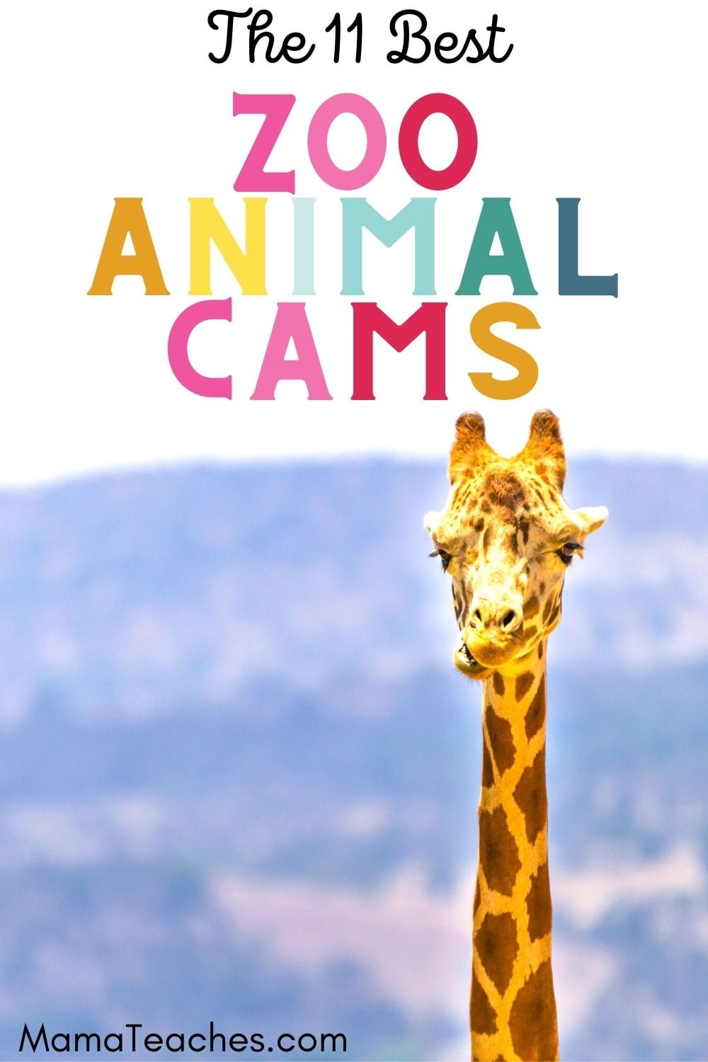 The 11 Best Zoo Animal Cams