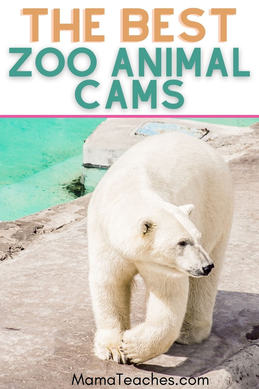 The 11 Best Zoo Animal Cams for Kids