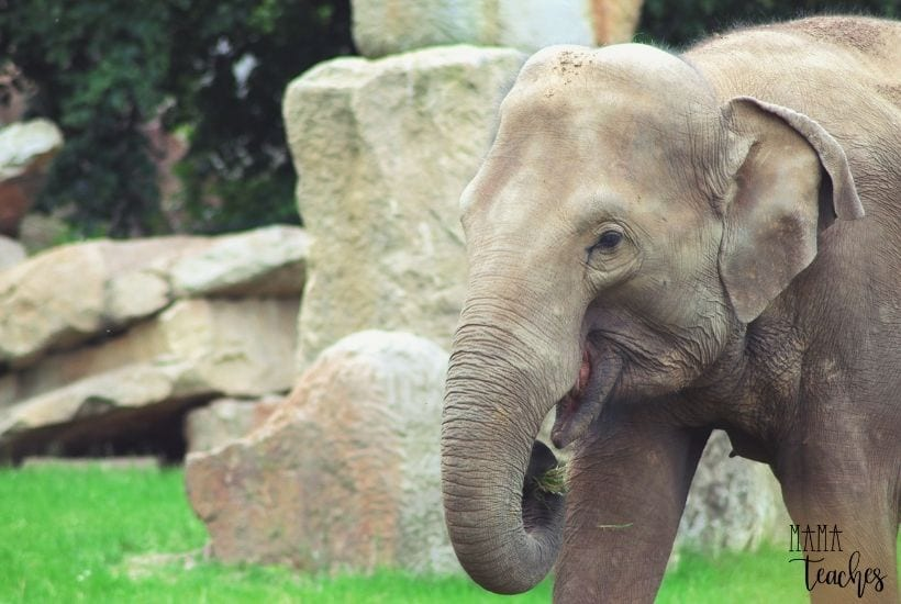 The Best Zoo Animal Cams for Kids