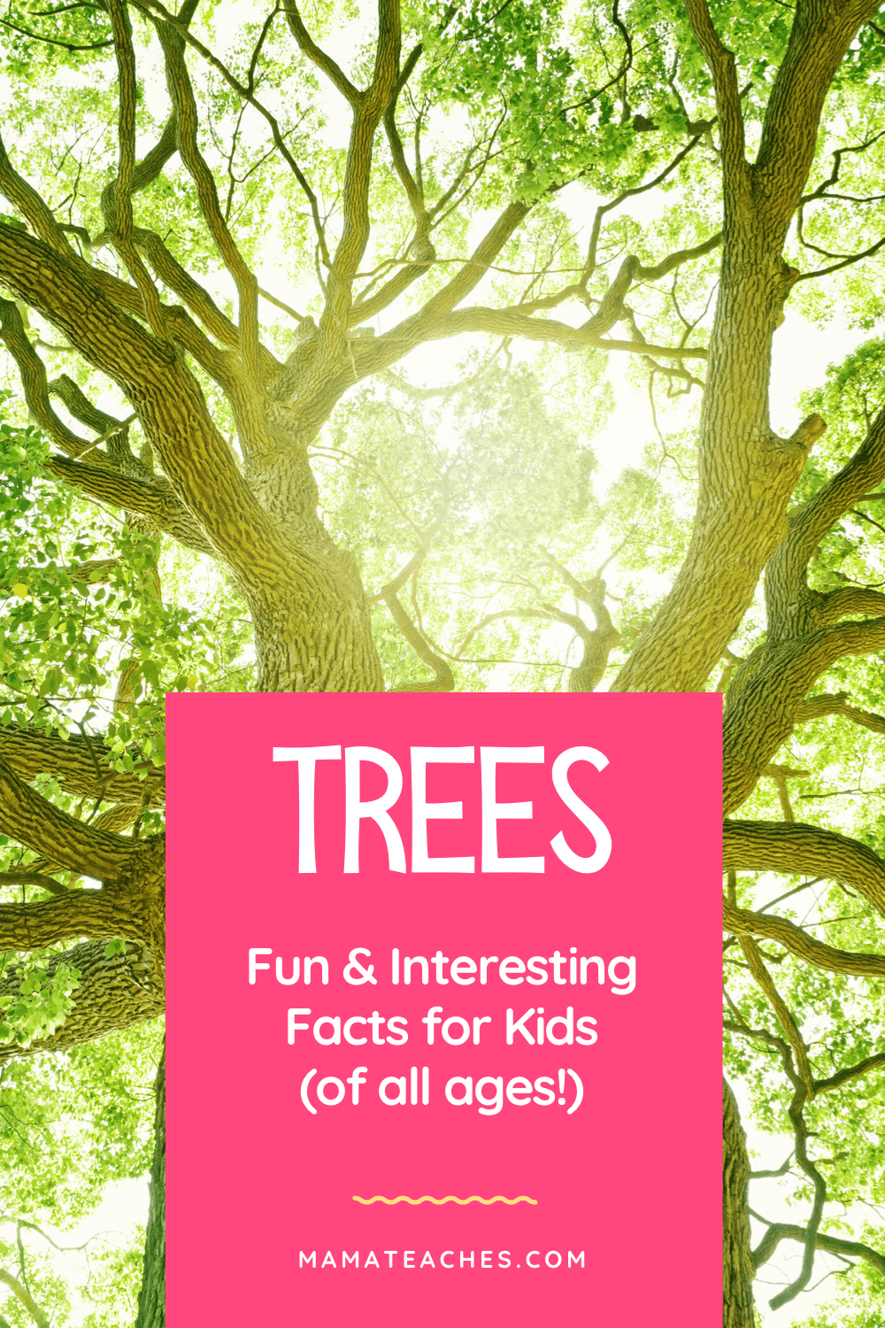 Fun Facts About Trees - giant trees like the one pictured are the best!