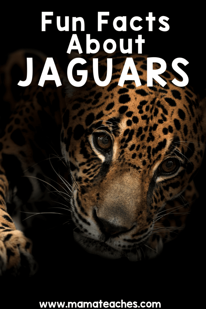 Fun Facts About Jaguars