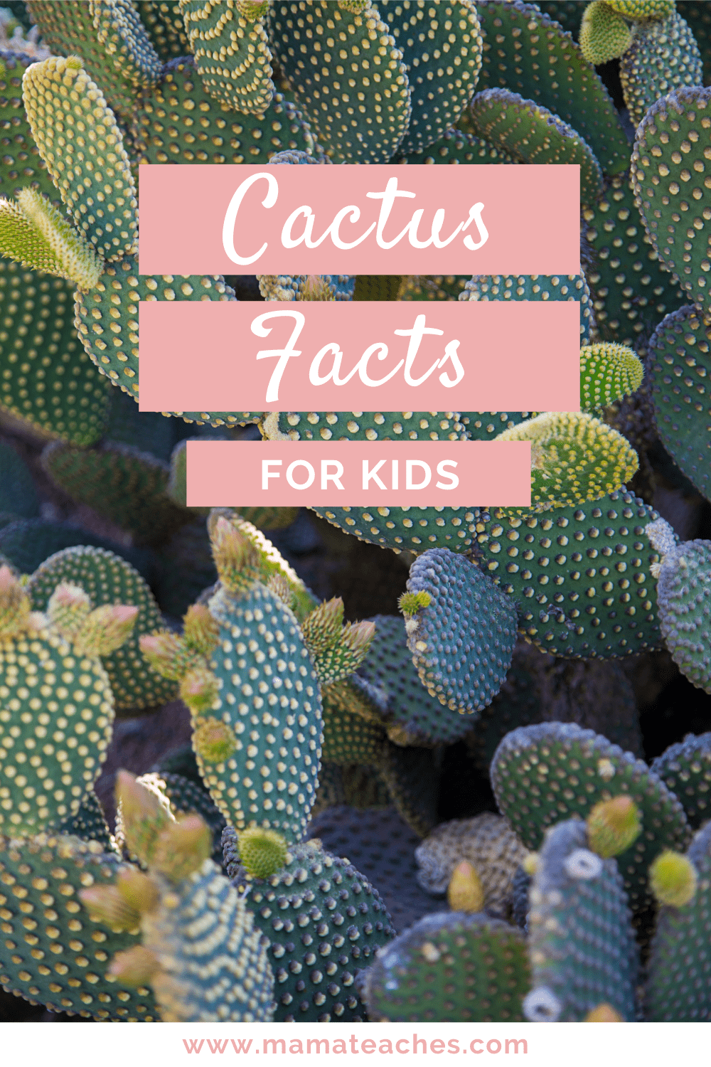 Cactus Facts for Kids